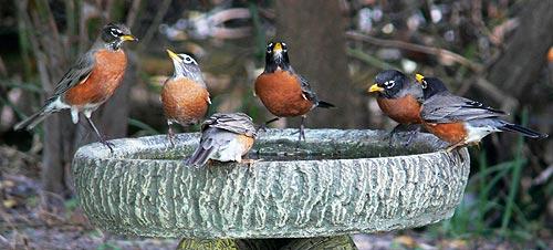 robins_birdbath.jpg
