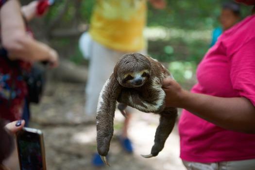 sloth-selfie-1.jpg