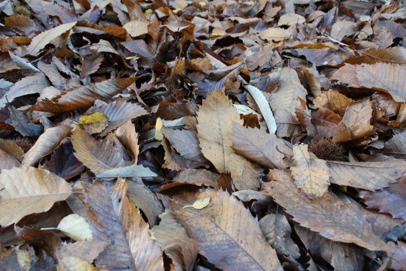 Autumn Walks: Holt CountryPark