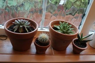 Succulents & cacti