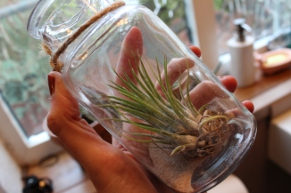 Air plant in vase with sand